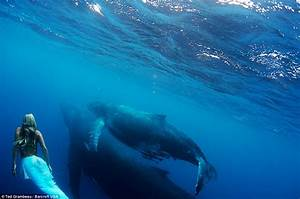 Yes, make it now.: Real-life mermaid swims with whales ...