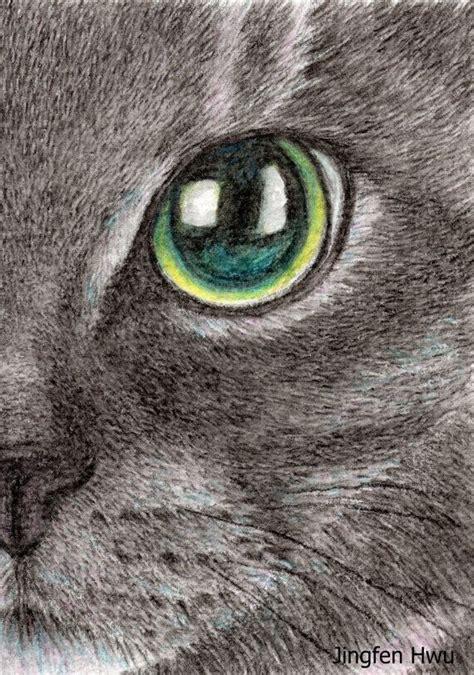 lifelike realistic cat drawing watercolor pencil black