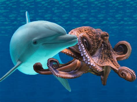 Dolphins vs. Octopuses: Showdown in the sea!