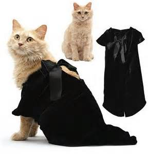 clothes for cats trendy clothes for cats