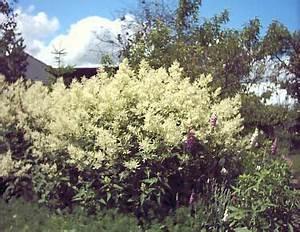 Gelbe Winterharte Pflanzen : 17 best images about wohnen pflanzen die ich kaufen muss on pinterest gardens hedges and warm ~ Markanthonyermac.com Haus und Dekorationen