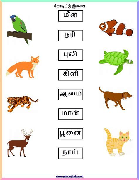 animals worksheet tamil  images worksheets