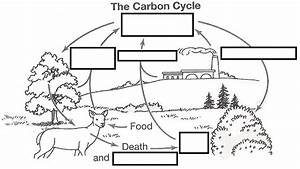 Wizer Me Free Interactive Carbon Cycle  Biology  Cycles  Blended Worksheet
