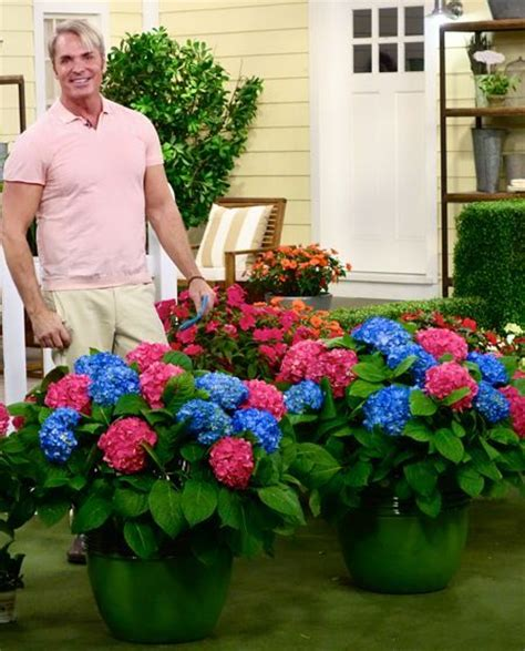 qvc gardening plants 7 best images about garden qvc on pinterest gardens trees and cottages