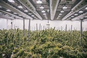 Canadian marijuana company Canopy Growth forms Brazilian ...