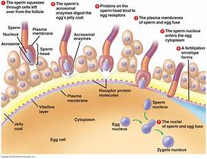 *Part C: Tracing the Path of Reproduction* - The ...