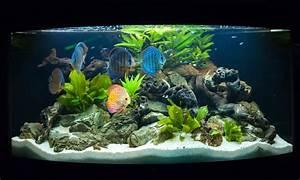 Liter Berechnen Aquarium : aquarium optimale wassermenge berechnen ~ Themetempest.com Abrechnung