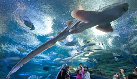 sea aquarium underwater world spending time to explore pattaya underwater world thailand culturetravel