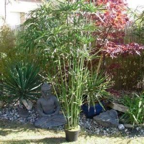 Plante Interieur Haute : plante haute exterieur pivoine etc ~ Teatrodelosmanantiales.com Idées de Décoration