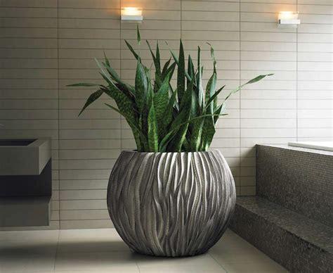 1001 + Ideen Für Zimmerpflanzen Für Wenig Licht
