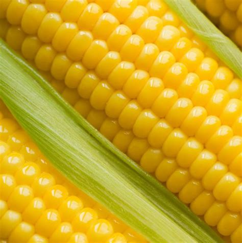 Yellow Maize Exporters & Suppliers in India | Bulk Corn ...
