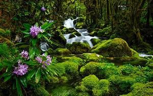 Hd nature wallpapers widescreen natural fresh desktop ...