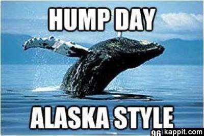 Alaska Memes - hump day alaska style