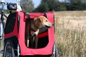 Hunde Fahrradanhänger Gefedert : wie wird der hunde fahrradanh nger am fahrrad befestigt ~ Jslefanu.com Haus und Dekorationen