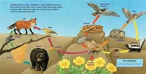 Image Gallery ecosystem animals