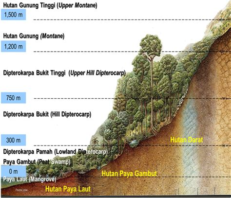 Forest Type Forestry Department Peninsular Malaysia