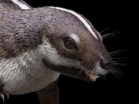 CRAZY BEAST : Madagascar s prehistoric critter sheds