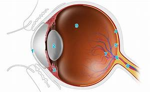 An Easy Guide To Your Eye U2019s Anatomy