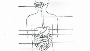 Labels Information List  30 Digestive System Diagram To Label