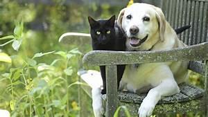 Schneckenkorn Giftig Für Hunde : ist knoblauch f r hunde und katzen giftig ~ Lizthompson.info Haus und Dekorationen