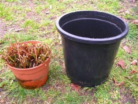 pot de rempotage plastique la culture des sarracenia en details