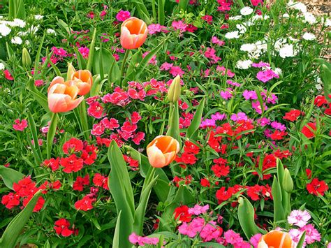 flowers in bloom ft worth botanical garden flickr