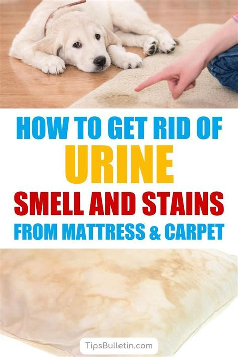 Bathroom Carpet Smells by How To Get Rid Of Urine Smell And Stains From Mattress And