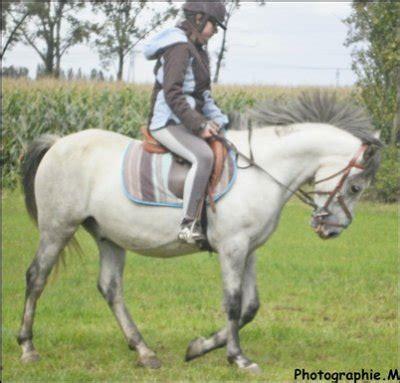 monter comme un cheval monter un cheval vous donne un go 251 t de libert 233 deja 4