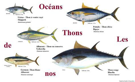 cuisiner du poisson blanc cuisine en folie tartare de thon albacore mangue et