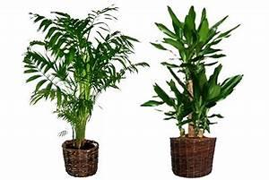 Fausse Plante Verte : plante verte plastique fleuriste bulldo ~ Teatrodelosmanantiales.com Idées de Décoration