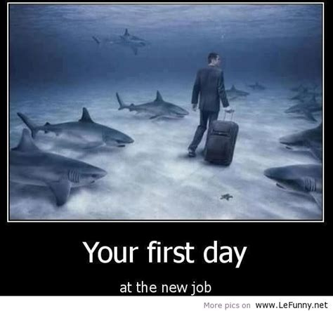 job quotes funny image quotes  hippoquotescom