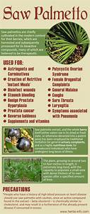 Uses And Benefits Of Saw Palmetto