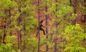 Ape Skunk Florida Everglades