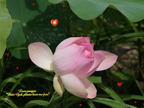 Of The Gods Flowers by God Wallpapers