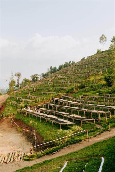 P 8462 a lot no: Documentry Photos of Coffee Plantations in Rwanda   500px Blog