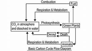 Carbon Cycle Labeling Diagram Meta Wiring Diagrams  U2014 Db