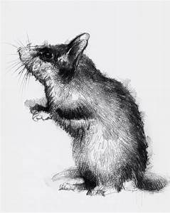 Dormouse | Art inspiration | Drawings, Art sketches ...