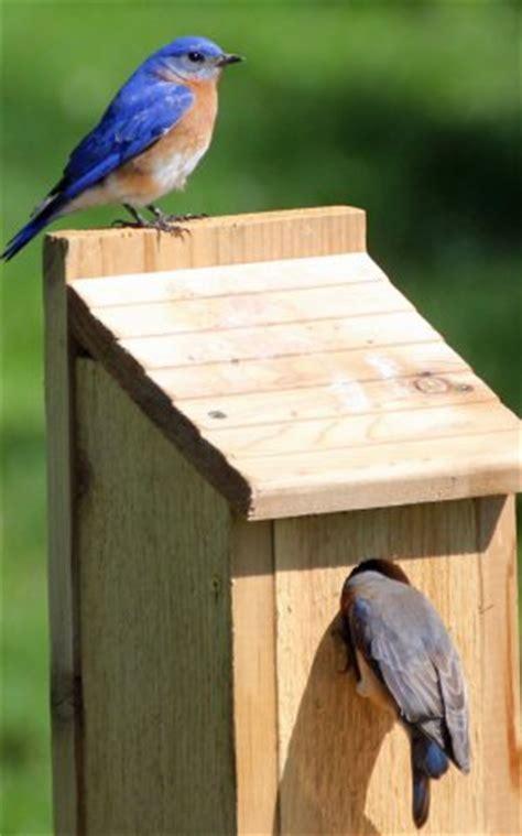 bird house plans bluebird purple martin wren