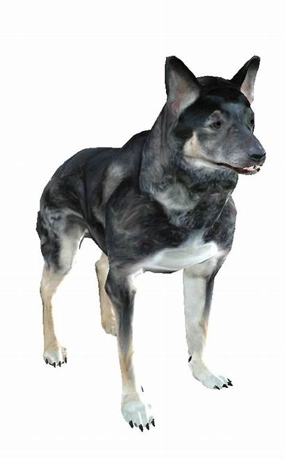 Dog Oblivion Creatures Imperial Library Daggerfall Info