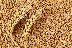 Wheat Pictures, Images and Stock Photos - iStock