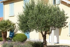 Wann Kann Man Rhabarber Ernten : wann kann man oliven ernten zeitpunkt der ernte beim olivenbaum ~ A.2002-acura-tl-radio.info Haus und Dekorationen
