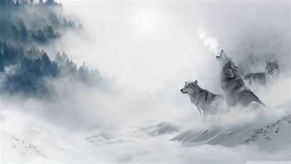 Wolf Howling Wallpapers Desktop 8k Backgrounds 4k