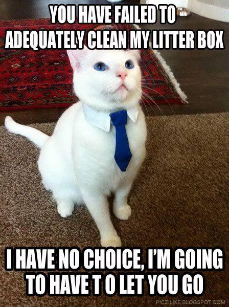 Funny Cat Memes Clean - clean grumpy cat memes image memes at relatably com