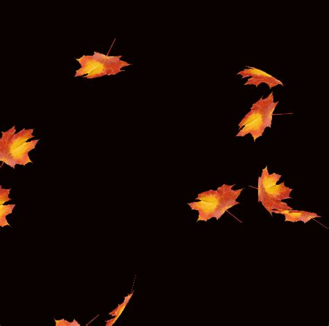 3d Falling Leaves Animated Wallpaper - блог колибри animated falling leaves background gif