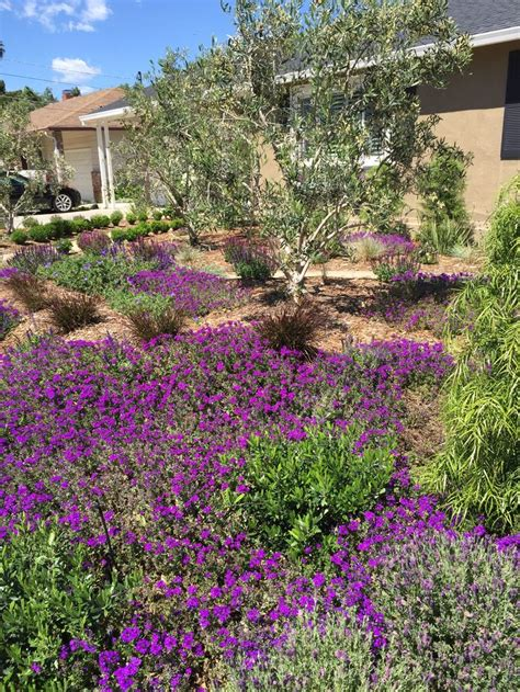 drought tolerant shrubs 17 best images about drought tolerant garden on pinterest dwarf boxwood perennials and