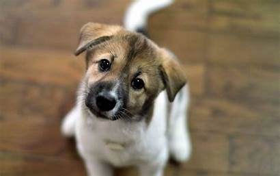 Puppy Wallpapers Cave