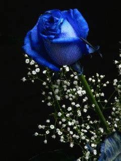 zdjecia  animowane gify  niebieskie roze gifmania