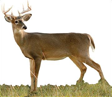 what a difference a year makes badgers bucks nba draft success how to age a whitetail buck