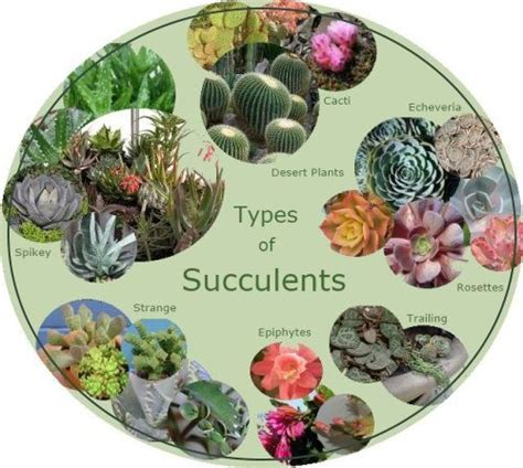 succulents types pictures types of succulents chubby spikey textured smooth