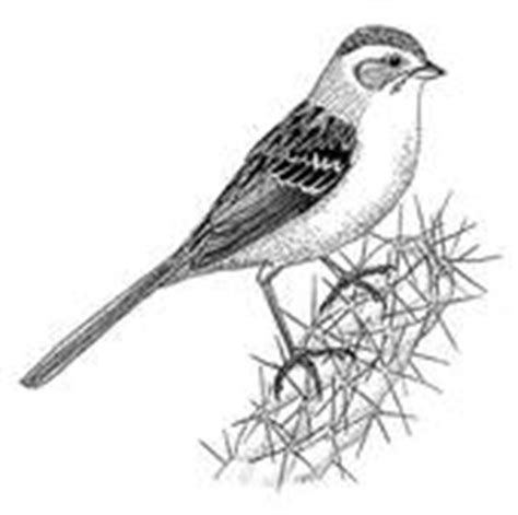 sparrow clipart black and white sparrow illustrations and clipart 528 sparrow royalty